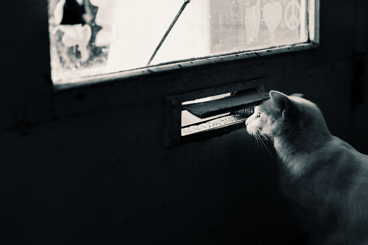 public viewing Vienna - cat is looking through a post slot