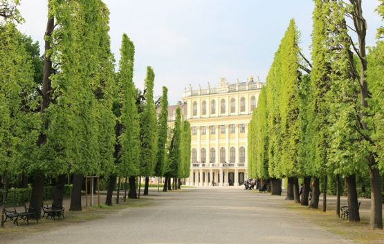 Alley at Schoenbrunn castle grounds